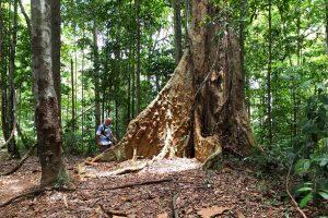 10052000975-kapok-tree