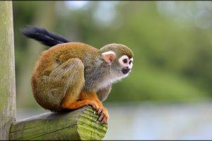 13944979156-monkey