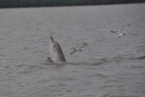 14776540437-43-dolfijnen-spotten-braamspunt