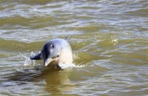 dolfijnen2