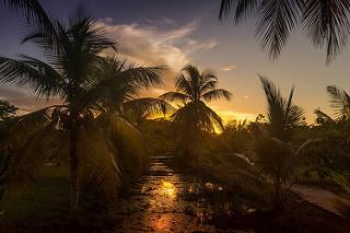 Suriname plantage