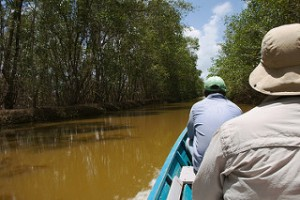 6863275305-cruising-the-mangroves-of-bigi-pan