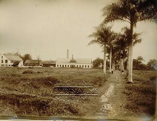 Plantage Paramaribo