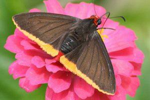 4057606431-vlinder