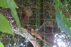 5935321379-paramaribo-zoo