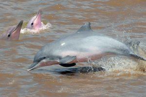 dolfijnen-2